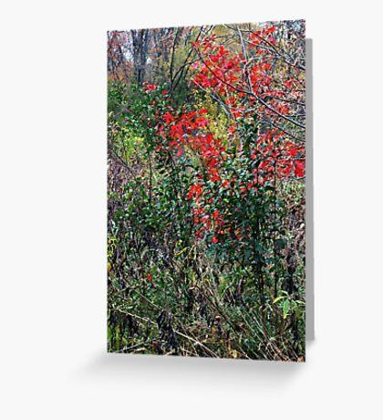 Autumn Scarlet Greeting Card