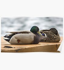 Duck Napping Poster