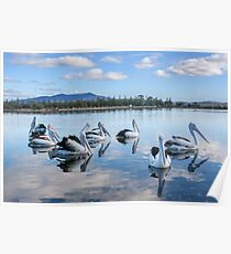Pelicans at Wagonga Inlet Poster