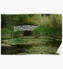 Hobart water-lilly garden Poster