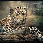 The Night of The Leopard by Brian Tarr