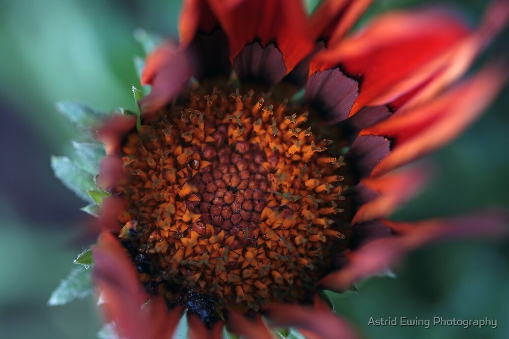 Dancing Flames by Astrid Ewing Photography