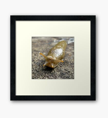 Someone To Love (available in ipad case) Framed Print