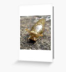 Someone To Love (available in ipad case) Greeting Card