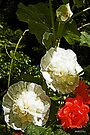 Hollyhocks and Roses Print/Poster by Terri Chandler