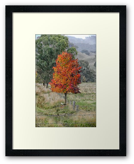 Stand Out From The Crowd -   Tumut  NSW Australia - The HDR Experience by Philip Johnson
