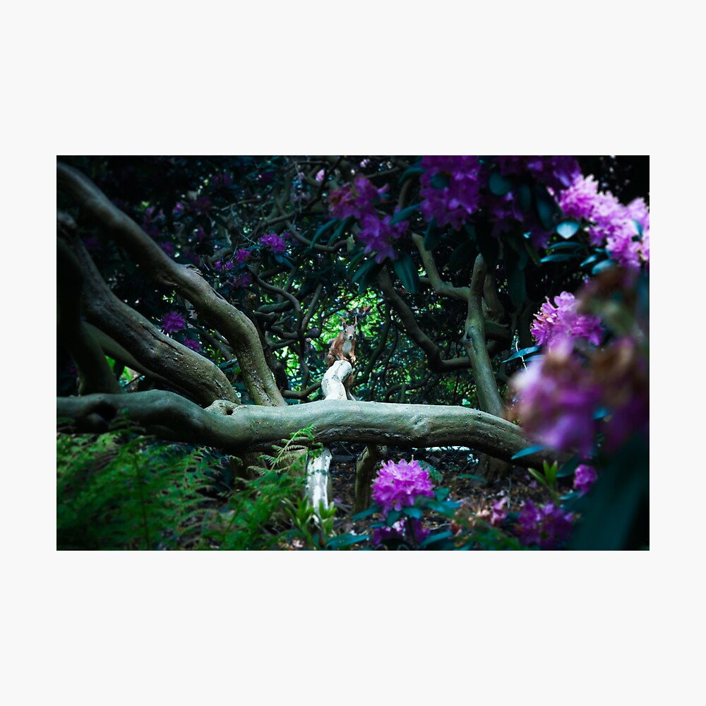 squirrel 002 Photographic Print