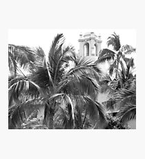 A Sneak Peek at the Royal Hawaiian Hotel Through the Palm Trees Photographic Print