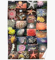 Pacific Northwest Marine Life Collage (portrait) Poster