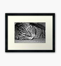 Kitten. Framed Print