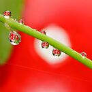 H20 Macro - Strawberry Drops by Gabrielle  Lees