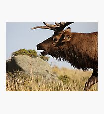 The Rut Photographic Print