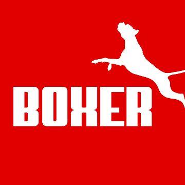 Boxer (white) by orono