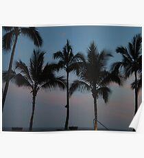 Sunset Palms V Poster