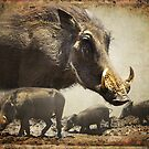 WARTHOG PROFILE by RonelBroderick