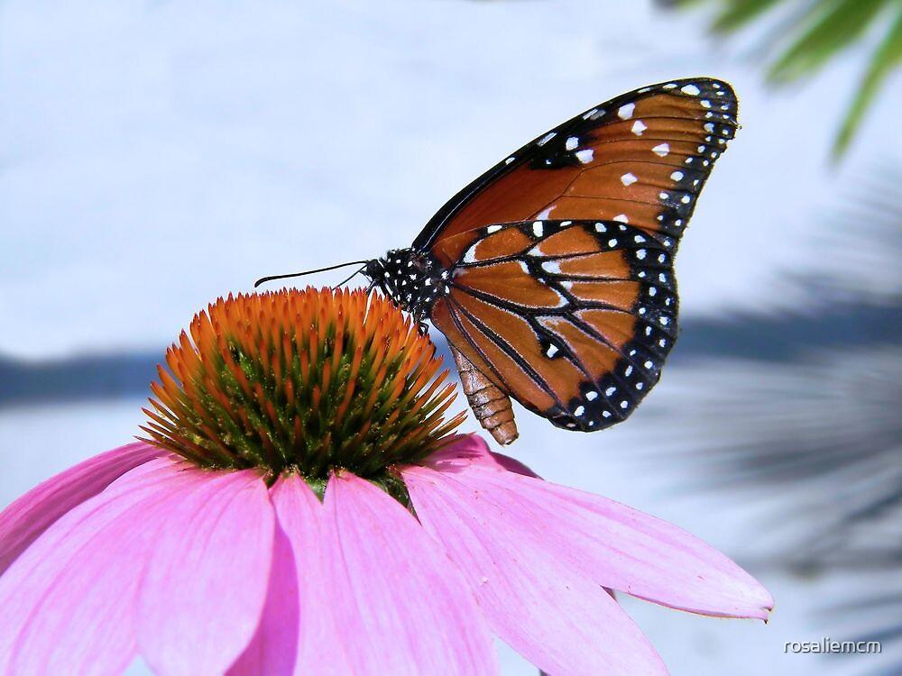 Butterfly by rosaliemcm