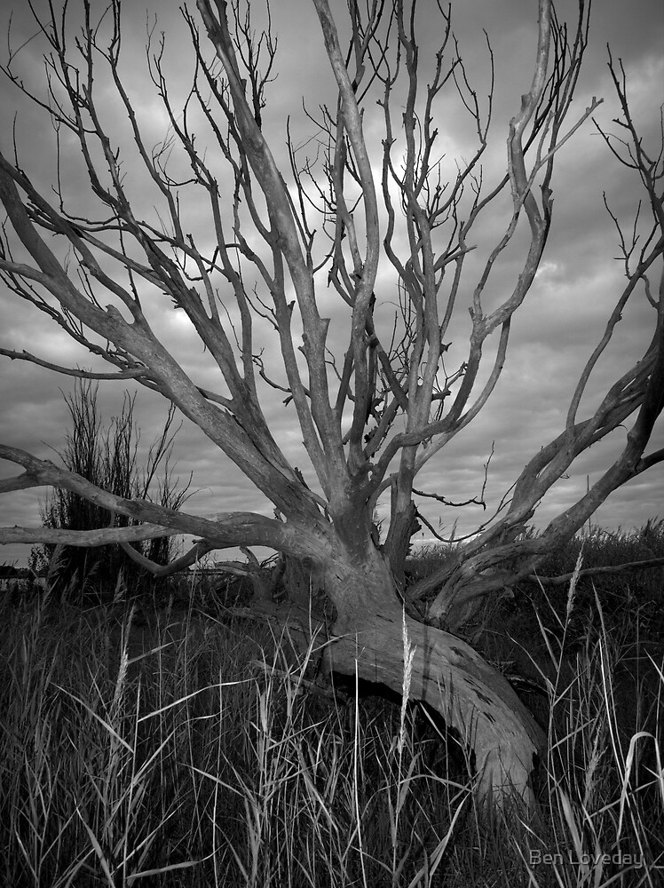 Scary Tree- Milang by Ben Loveday