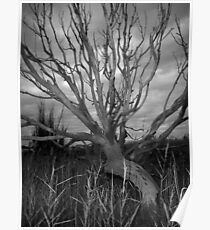 Scary Tree- Milang Poster