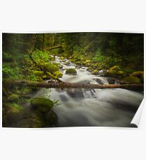 The Waters of Larch Mountain Poster