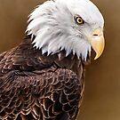 Eagle Down by Karri Klawiter