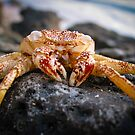 Crabby by bungeecow