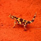 Thorny Devil (Moloch horridus) by Michelle Munday