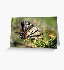 Canadian Tiger Swallowtail Greeting Card
