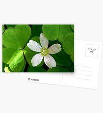 shamrock Postcards