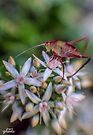Grasshopper on Flowers by yolanda