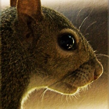 Portrait of a Mississippi Gray Squirrel/Natural by DwCCreations