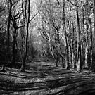 Path In the woods by bungeecow