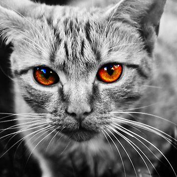 B&W Cat by esemyu