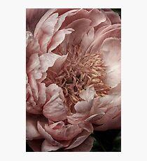 Pink Piony Photographic Print