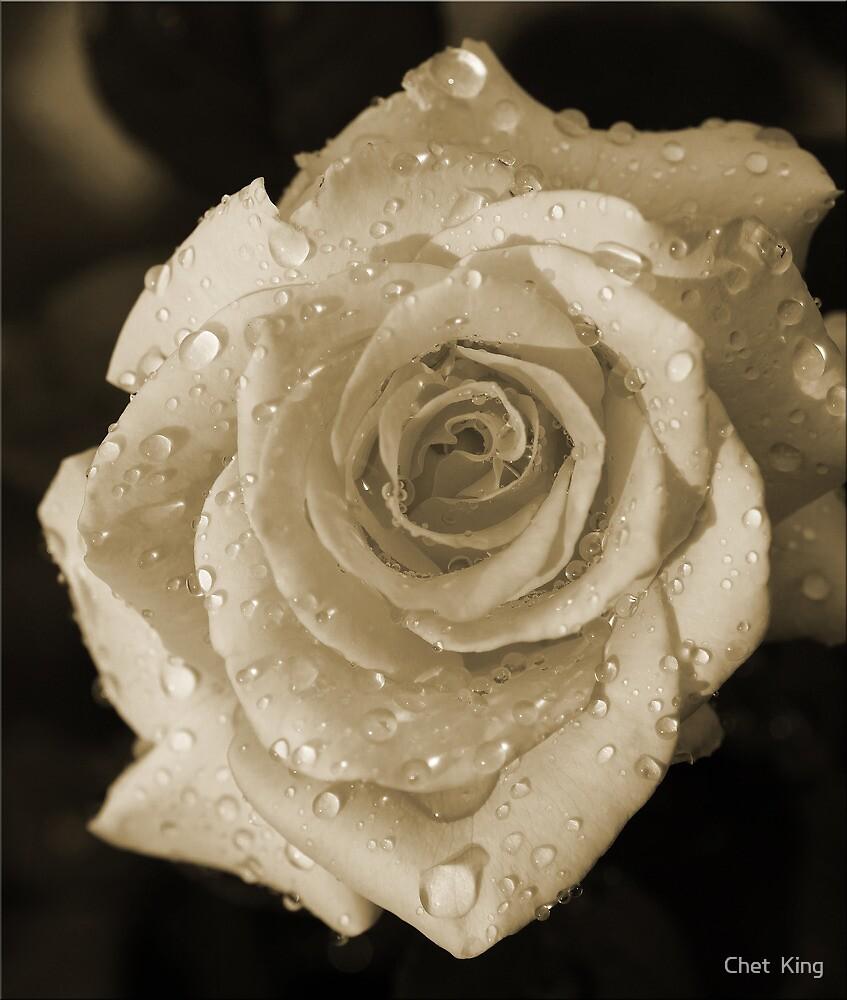 Sepia Rosa by Chet  King