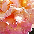 Peaches & Cream by Morag Bates