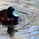 Quack in siver waters by evvy84