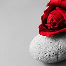 Roses are red, rocks are White by evvy84