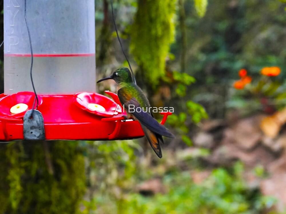 Mindo Rain Forest Hummingbird by Al Bourassa