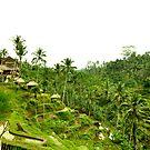 Balinese paddies by atplum