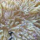 Sea Anemone by wickedmommicked