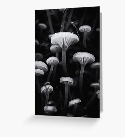 Voices in the Darkness Greeting Card
