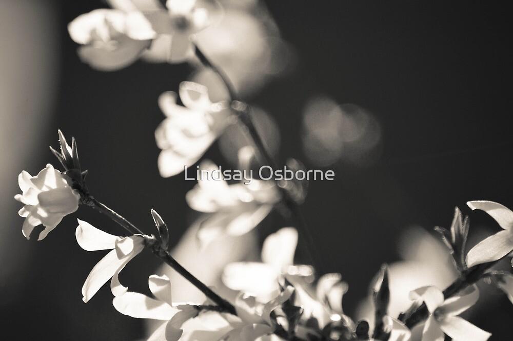 Black and White Flowers. by Lindsay Osborne