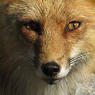 Foxy Lady by Alex Call