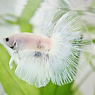 Ink, Marble Halfmoon Betta by justCat