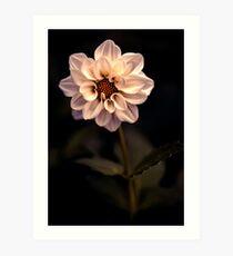 An insomniac amongst the flowers Art Print