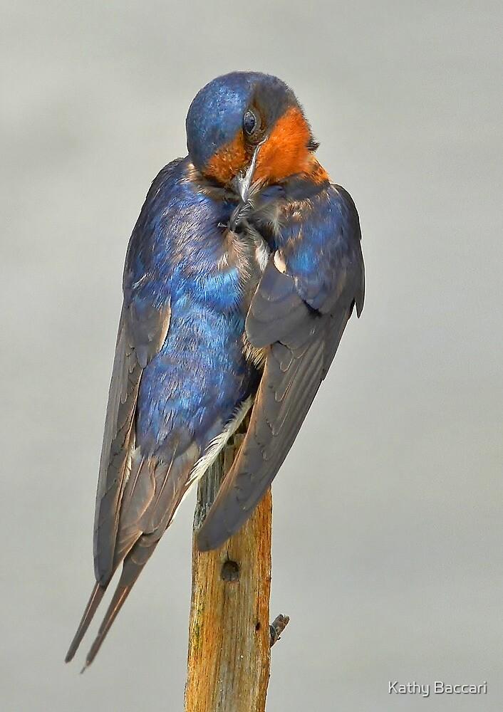 Swallow by Kathy Baccari