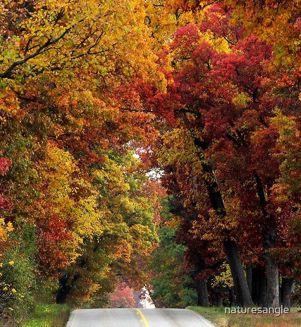 Autumn Path by naturesangle