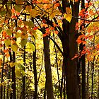 Fall Into Autumn by naturesangle