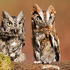 Screech Owls Hanging Out by naturesangle
