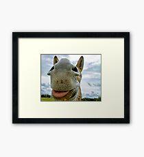 Donkey Humour Framed Print